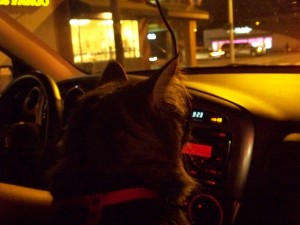 Tokhes as the co-pilot in suburbia Seattle